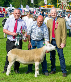 Champion of Champions, Interbreed Sheep Texel from F and IF Murray