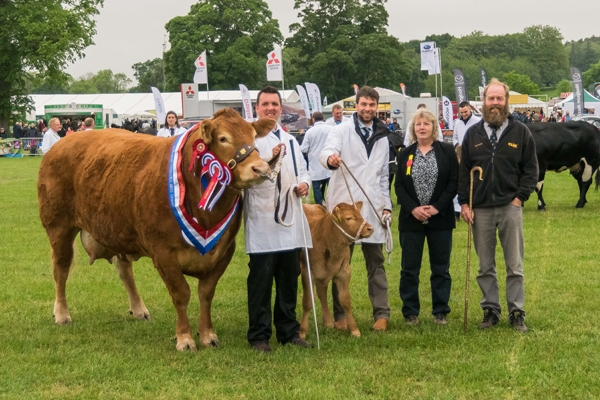 Champion of Champions (113)  Limousin Cow and Calf from Messrs Jenkinson - with judges Sybil and George MacPherson